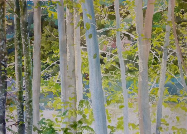 first layer on the trees trunks light watercolor wash