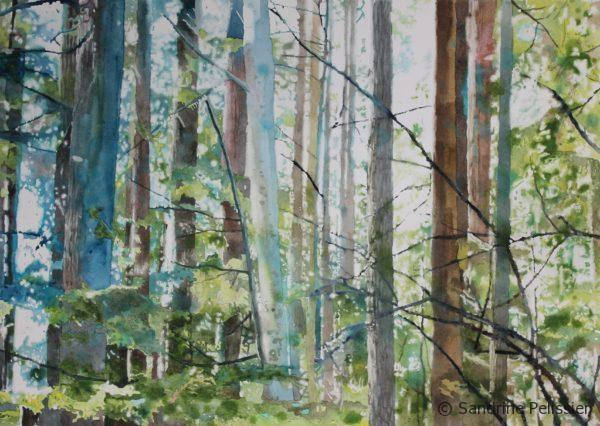 watercolor forest painting by North Vancouver artist Sandrine Pelissier