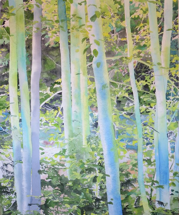 first light washes  on the trees trunks