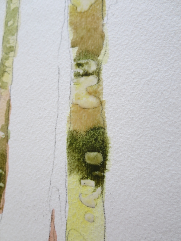 make a rough outline of the trees and preserve some whites with masking fluid