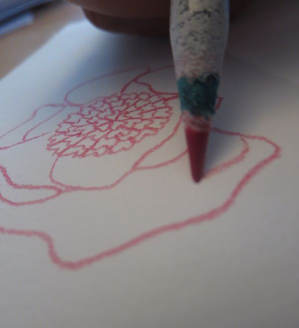 you can use colored pencils to draw the outline of the flowers