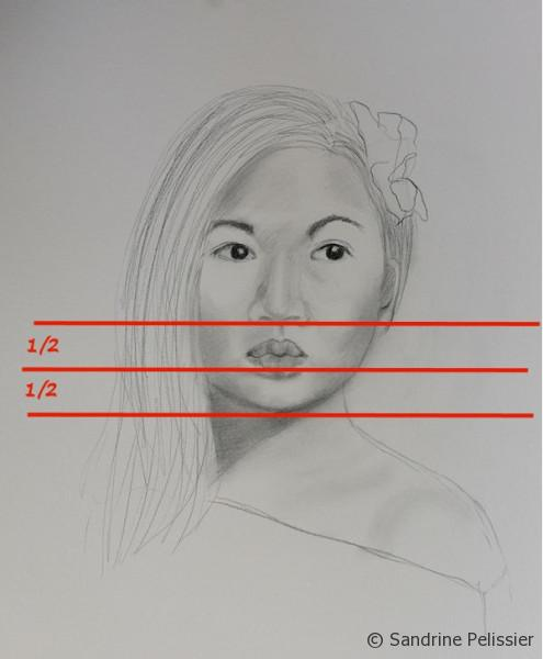 location of the mouth and chin for the basic proportions of the face