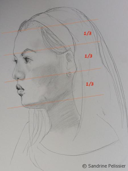 You can divide the face into 3 equal thirds for the basic proportions of the face
