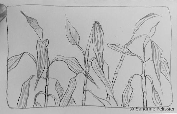 You can draw plants- learn how to draw